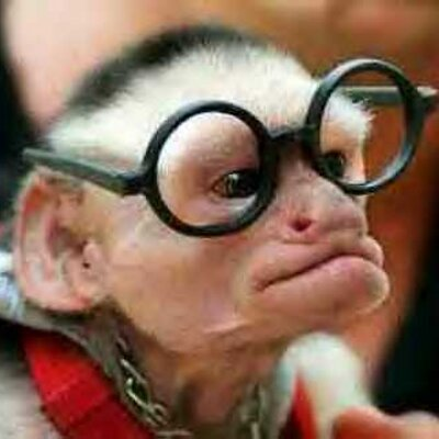 Mr monkey 400x400