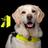 Assistentiehonden