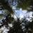 BC Community Forest Association