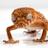 Gecko Tips