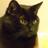 @kotczarny Profile picture