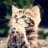 🍀癒しの猫ねこ動画🐱