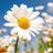 Daisy3218's avatar'