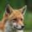FoxesandMore