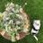 Puggs Meadow Flowers