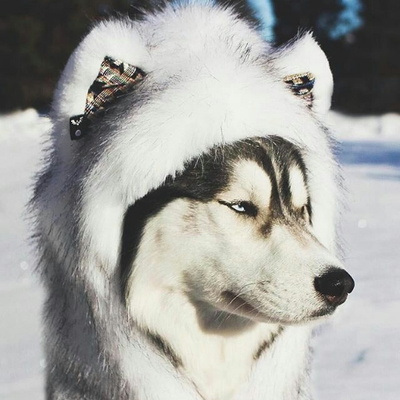 animalsloves (@animals_gift) Twitter profile photo