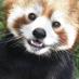 動物大好き's Twitter Profile Picture