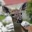 Key Deer Awareness Day