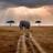Ndurumo tours and safaris
