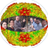 Picornavirus Molecular Biology
