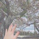 _uni_sakura