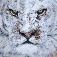 Justin Pryce (@jpbeastman) Twitter profile photo