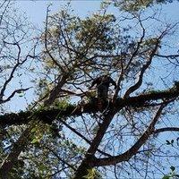 North Atlanta Tree Service