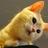 猫カフェ きゃりこのプロフィール画像