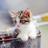 可愛い猫画像bot