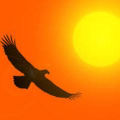 Vrijheidsvogel