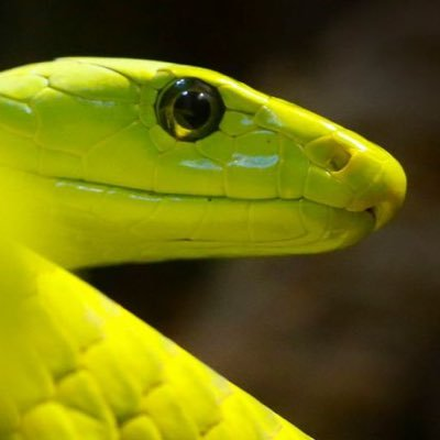 Green Mamba Tips