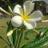 cali_ste's avatar'