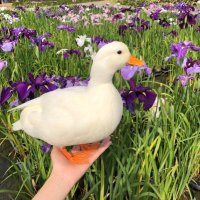 Ducks! 🦆