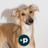 @PersuaidDigital Profile picture