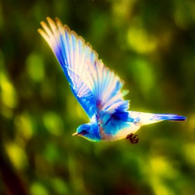 Blue Bird S