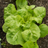 Pluktuin Sayuran