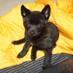 甲斐犬🐾清玄's Twitter Profile Picture