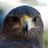 @Bird_Trivia Profile picture