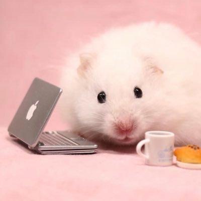 Tiny Animals  🐾