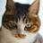 マルセイユ猫 (@EtoileTokyo)