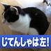 @nekokichi34