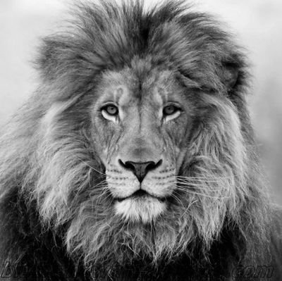 The Dandy Lion Squad
