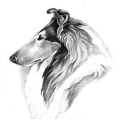 Collie Club of America