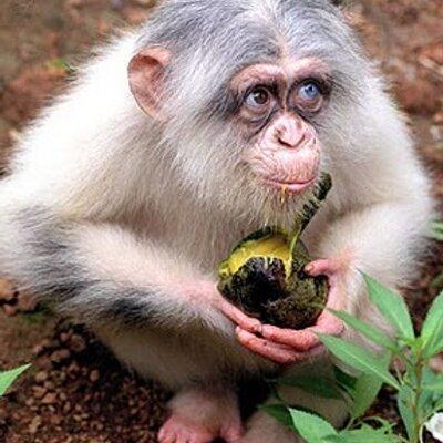 онлайн автоматы monkey играть crazy игровые
