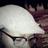 Amara9493's avatar'