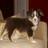 jasmin (@JasminBuffy1255) Twitter profile photo
