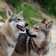 Tamaskan Dog Register