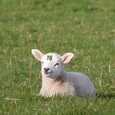 76番目の子羊 (@agneau_No76) | ทวิตเตอร์