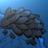 MusselsAreCool avatar