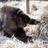 Oklahoma Primate Sanctuary