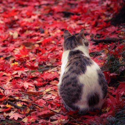 秋楓(かえで)のアイコン