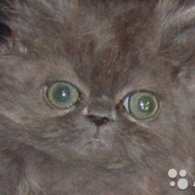 кошка у окошка (@oops_peresolila)