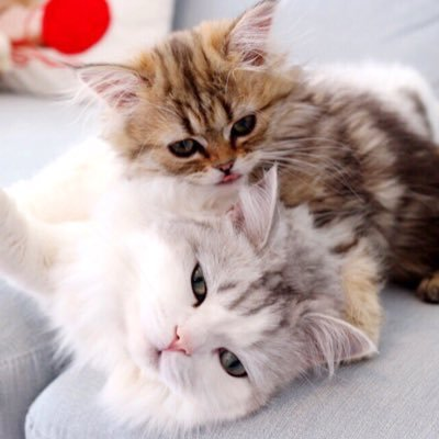Leon & Lily Bub  🐾
