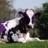 Devn Nunes' Guilty as Fudge Dotrard Cow