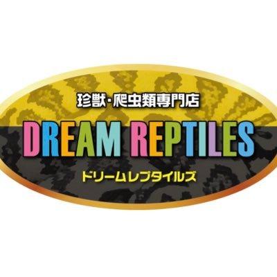 DREAM REPTILES 珍獣·爬虫類専門店 ドリームレプタイルズ UKPYTHONS日本代理店