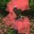 andreasscholl09 avatar