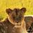 野生動物のケニア