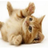 Daily Kitties 😸