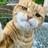 にゃんこ先生 (@CatTeacher_Nyan)