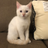 @socommentarycat Profile picture
